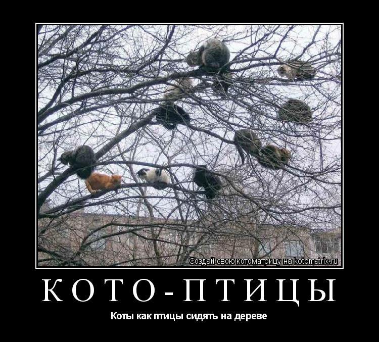 Котоматрица: Кото-птицы Коты как птицы сидять на дереве