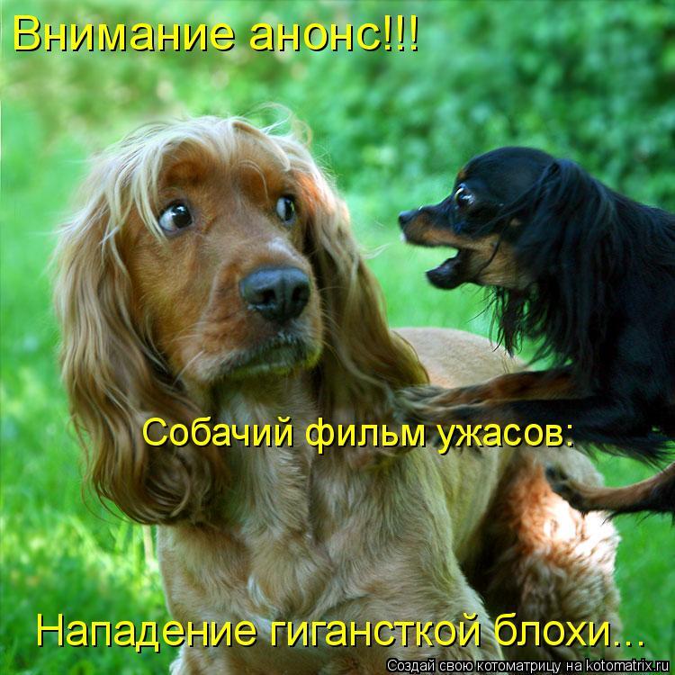 Котоматрица: Собачий фильм ужасов: Внимание анонс!!! Нападение гигансткой блохи...