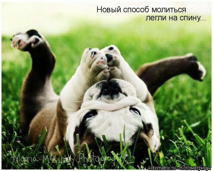 Котоматрица: Новый способ молиться легли на спину...
