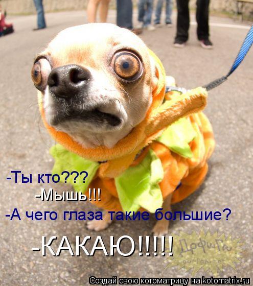 Котоматрица: -Ты кто??? -Мышь!!! -А чего глаза такие большие? -КАКАЮ!!!!!