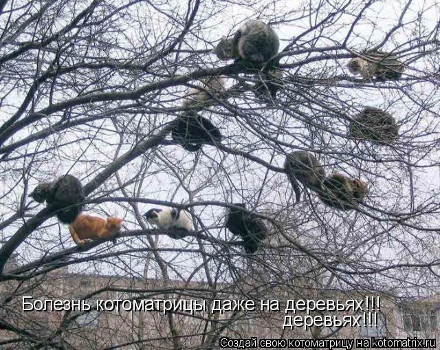 Котоматрица: Болезнь котоматрицы даже на деревьях!!! деревьях!!!