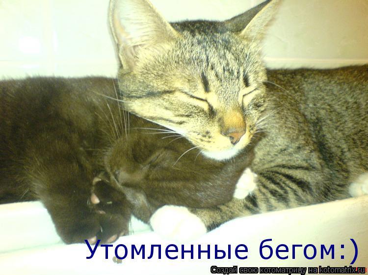 Котоматрица: Утомленные бегом:)