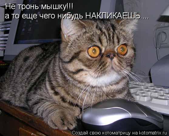 Котоматрица: Не тронь мышку!!! а то еще чего нибудь НАКЛИКАЕШЬ....