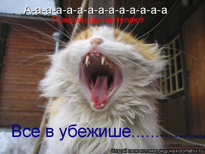 Котоматрица: А-а-а-а-а-а-а-а-а-а-а-а-а-а Пришельцы наступают Все в убежише................