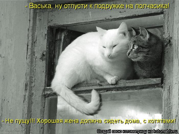 Котоматрица: - Васька, ну отпусти к подружке на полчасика! - Не пущу!!! Хорошая жена должна сидеть дома, с котятами!