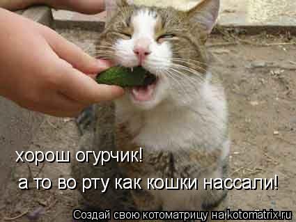 Котоматрица: хорош огурчик! а то во рту как кошки нассали! а то во рту как кошки нассали!