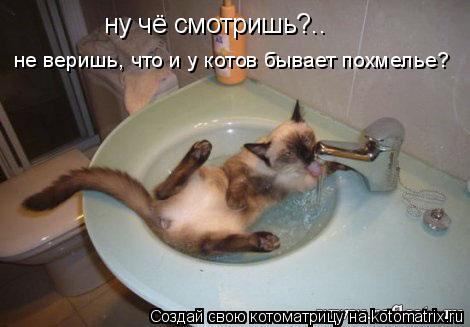 Котоматрица: не веришь, что и у котов бывает похмелье? ну чё смотришь?..