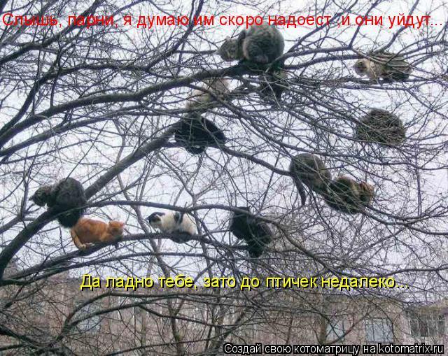 Котоматрица: Слышь, парни, я думаю им скоро надоест ,и они уйдут... Да ладно тебе, зато до птичек недалеко...