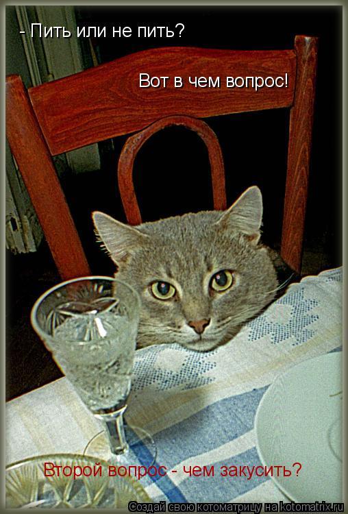 Котоматрица: - Пить или не пить?  Вот в чем вопрос! Второй вопрос - чем закусить?