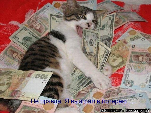Котоматрица: Не правда. Я выиграл в лотерею ....