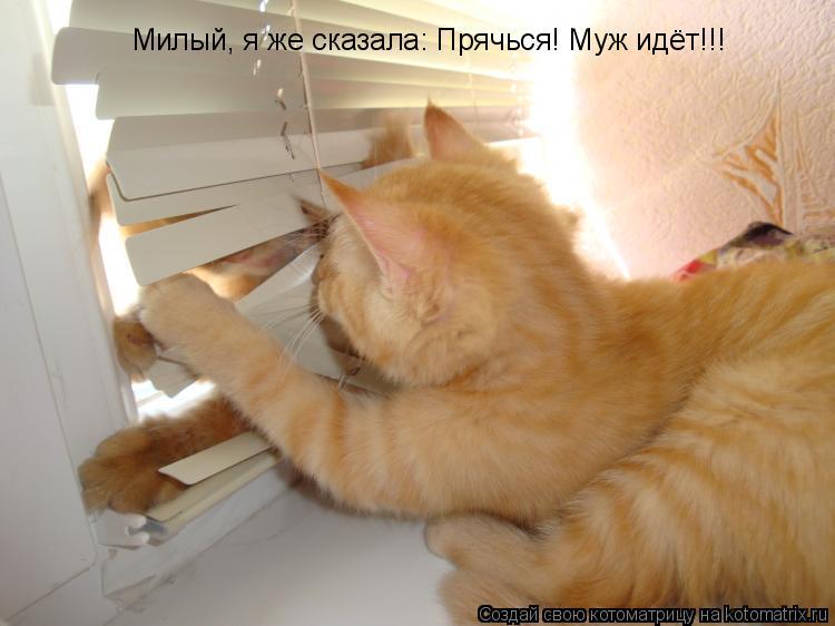 Котоматрица: Милый, я же сказала: Прячься! Муж идёт!!!
