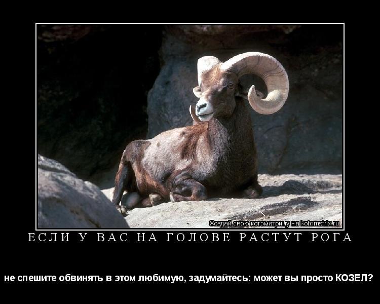 Котоматрица: если у вас на голове растут рога не спешите обвинять в этом любимую, задумайтесь: может вы просто КОЗЕЛ?