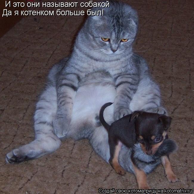 Котоматрица: И это они называют собакой Да я котенком больше был!