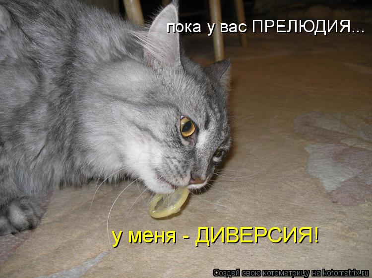 Котоматрица: пока у вас ПРЕЛЮДИЯ... у меня - ДИВЕРСИЯ!