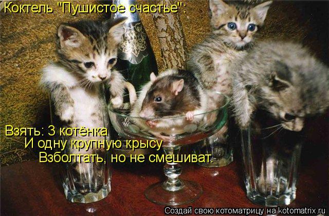 """Котоматрица: Коктель """"Пушистое счастье"""": Взять: 3 котёнка И одну крупную крысу Взболтать, но не смешиват."""