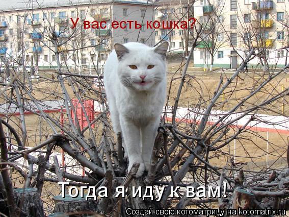 Котоматрица: У вас есть кошка? Тогда я иду к вам!