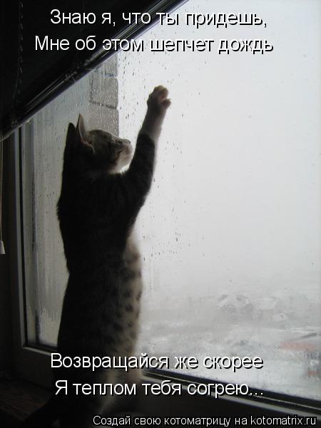 Котоматрица: Знаю я, что ты придешь, Мне об этом шепчет дождь Возвращайся же скорее Я теплом тебя согрею...