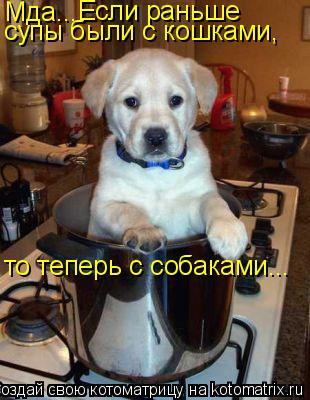 Котоматрица: Мда... Если раньше супы были с кошками, то теперь с собаками...