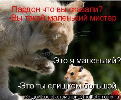 Котоматрица: -Это я маленький? -Пардон что вы сказали? -Вы такой маленький мистер -Это ты слишком большой