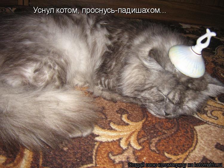 Котоматрица: Уснул котом, проснусь-падишахом...