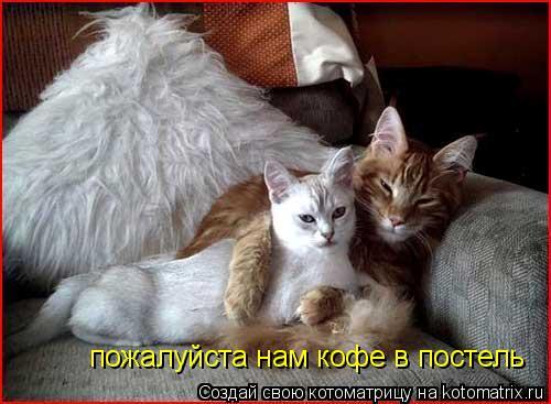 Котоматрица: пожалуйста нам кофе в постель