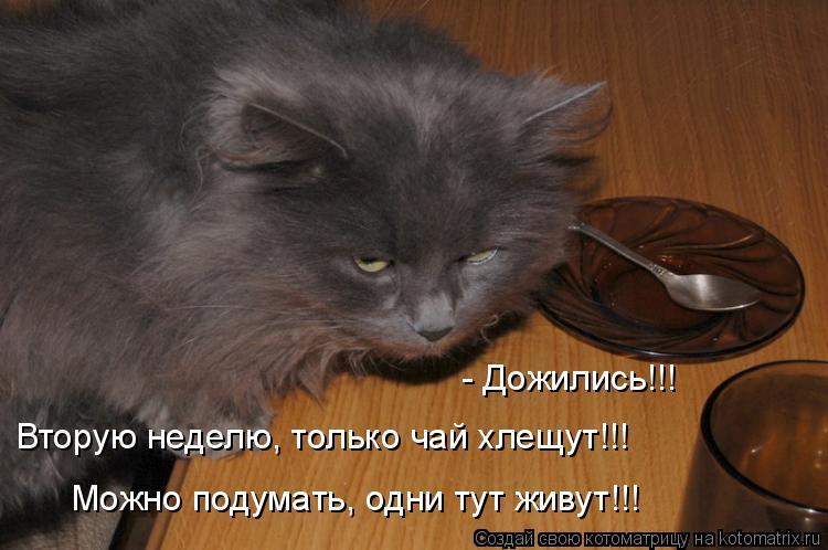 Котоматрица: - Дожились!!! Можно подумать, одни тут живут!!! Вторую неделю, только чай хлещут!!!