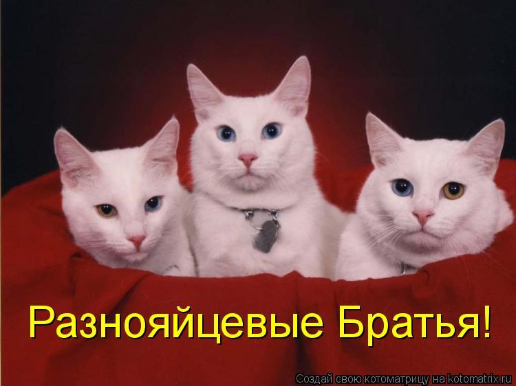 Котоматрица: Разнояйцевые Братья!