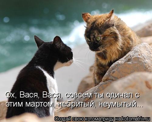 Котоматрица: Ох, Вася, Вася, совсем ты одичал с этим мартом, небритый, неумытый...