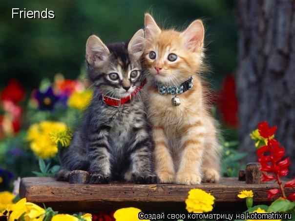 Котоматрица: Friends