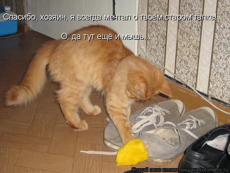 Котоматрица: Спасибо, хозяин, я всегда мечтал о твоём старом тапке! О, да тут ещё и мышь...