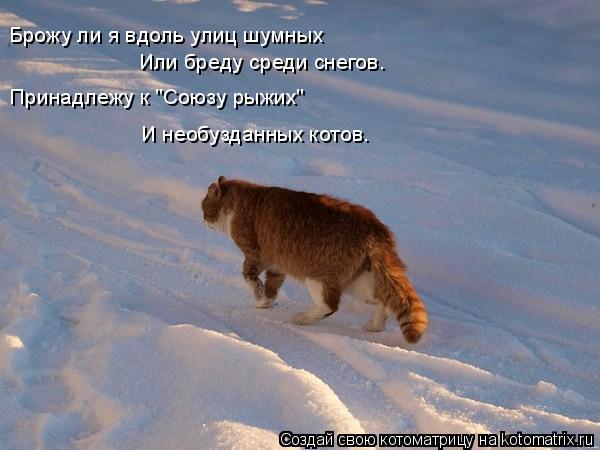 """Котоматрица: Брожу ли я вдоль улиц шумных Или бреду среди снегов. Принадлежу к """"Союзу рыжих"""" И необузданных котов."""
