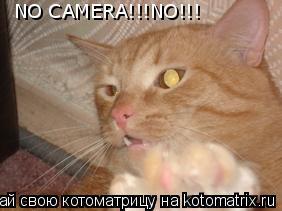 Котоматрица: NO CAMERA!!!NO!!!