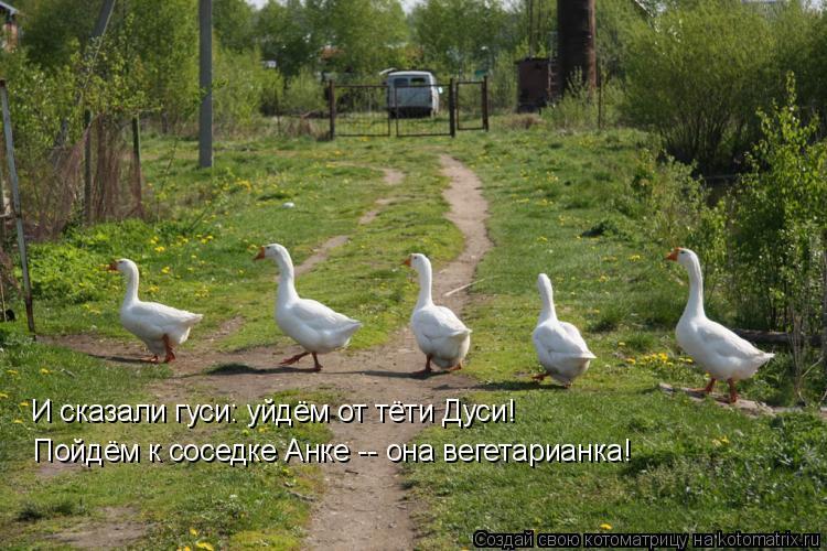 Котоматрица: И сказали гуси: уйдём от тёти Дуси! Пойдём к соседке Анке -- она вегетарианка!