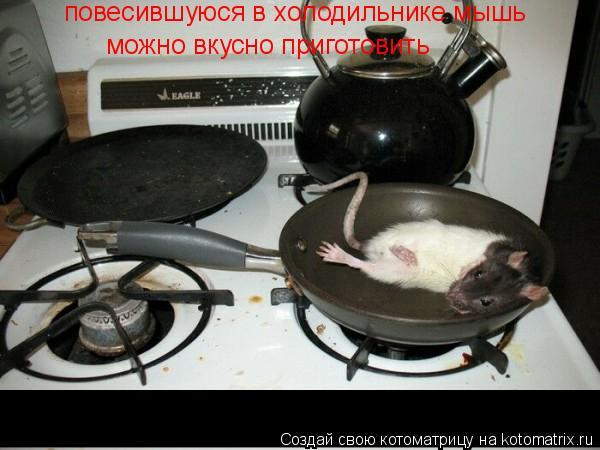 Котоматрица: повесившуюся в холодильнике мышь можно вкусно приготовить