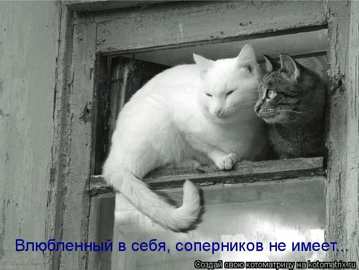 Котоматрица: Влюбленный в себя, соперников не имеет...