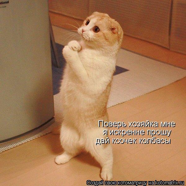 Котоматрица: Поверь хозяйка мне я искренне прошу дай ксочек колбасы