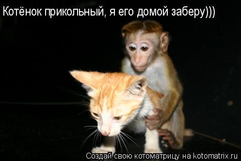 Котоматрица: Котёнок прикольный, я его домой заберу)))