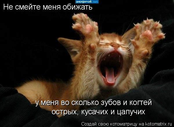 Котоматрица: Не смейте меня обижать у меня во сколько зубов и когтей острых, кусачих и цапучих