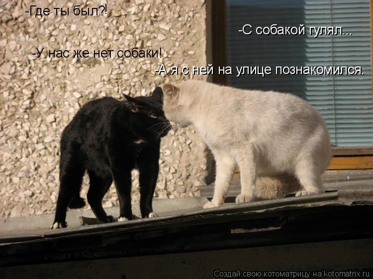 Котоматрица: -С собакой гулял... -Где ты был? -У нас же нет собаки! ! -А я с ней на улице познакомился.