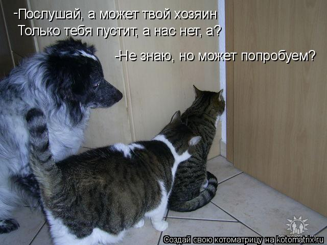 Котоматрица: - П ослушай, а может твой хозяин Только тебя пустит, а нас нет, а? -Не знаю, но может попробуем?