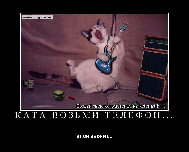 Котоматрица: Ката возьми телефон... эт он звонит...
