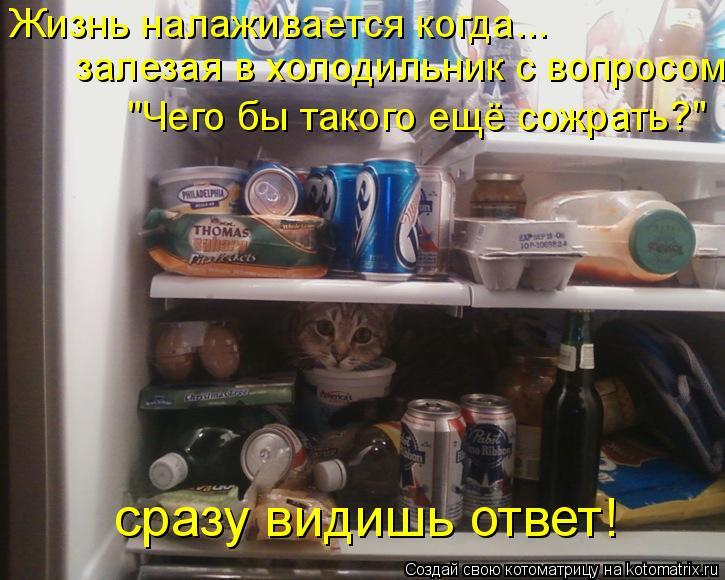 """Котоматрица: Жизнь налаживается когда...   залезая в холодильник с вопросом  """"Чего бы такого ещё сожрать?""""   сразу видишь ответ!"""