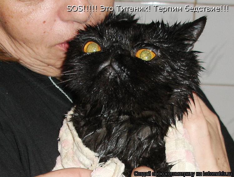 Котоматрица: SOS!!!!! Это Титаник! Терпим бедствие!!!
