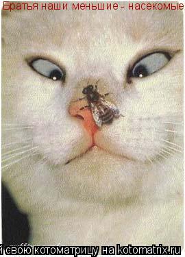 Котоматрица: Братья наши меньшие - насекомые!  Братья наши меньшие - насекомые!
