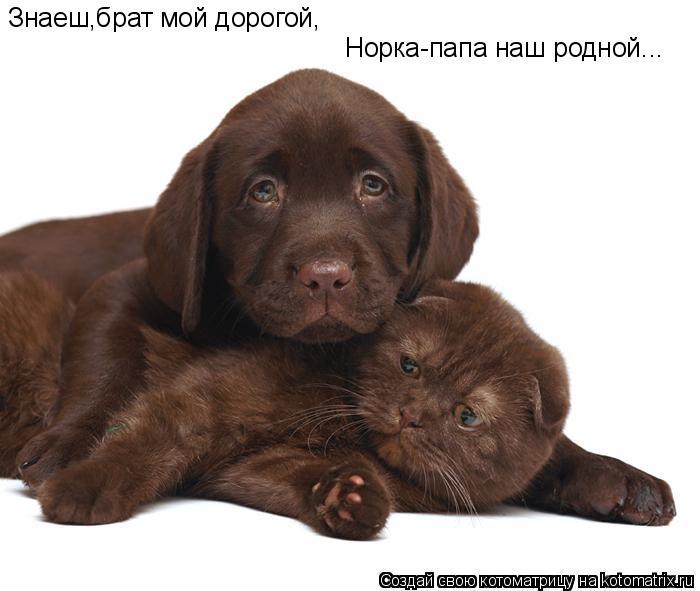 Котоматрица: Знаеш,брат мой дорогой, Норка-папа наш родной...