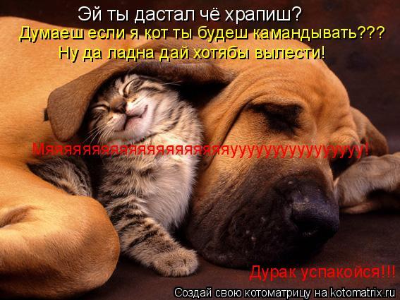 Котоматрица: Эй ты дастал чё храпиш? Думаеш если я кот ты будеш камандывать??? Ну да ладна дай хотябы вылести! Мяяяяяяяяяяяяяяяяяяяяуууууууууууууууу! Дур