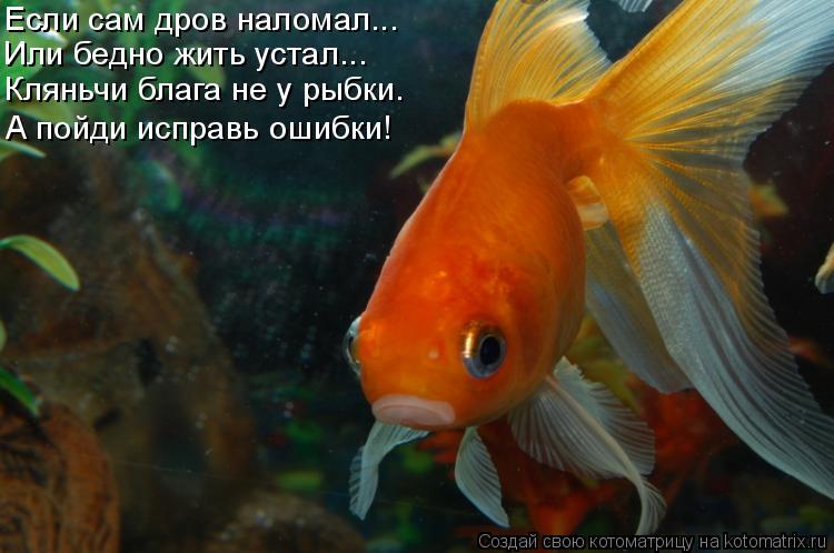 Котоматрица: Если сам дров наломал... Или бедно жить устал... Кляньчи блага не у рыбки. А пойди исправь ошибки!