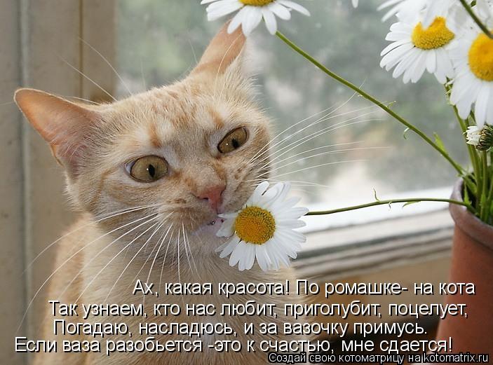 Котоматрица: Ах, какая красота! По ромашке- на кота Так узнаем, кто нас любит, приголубит, поцелует, Погадаю, насладюсь, и за вазочку примусь.  Если ваза раз