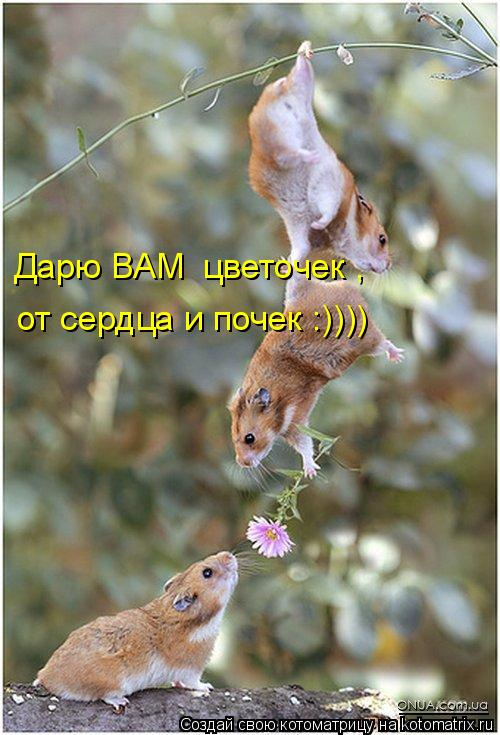 Котоматрица: Дарю ВАМ  цветочек , от сердца и почек :))))