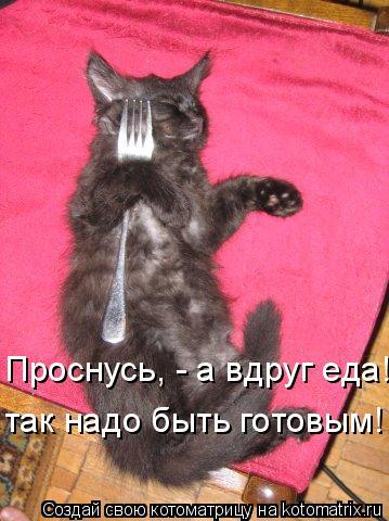 Котоматрица: Проснусь, - а вдруг еда! так надо быть готовым!